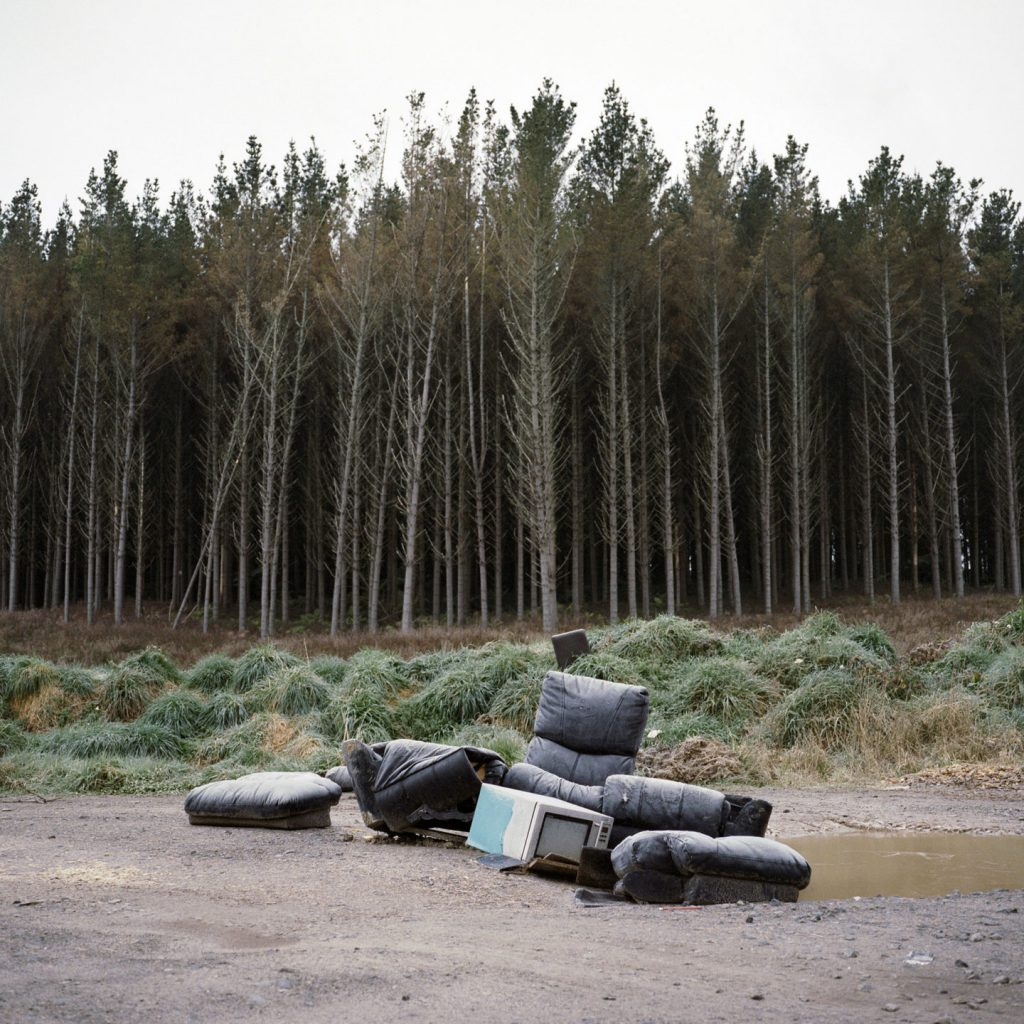 Kinleith Forest, 2017. Shot on Kodak Portra 400 with a Mamiya 6.