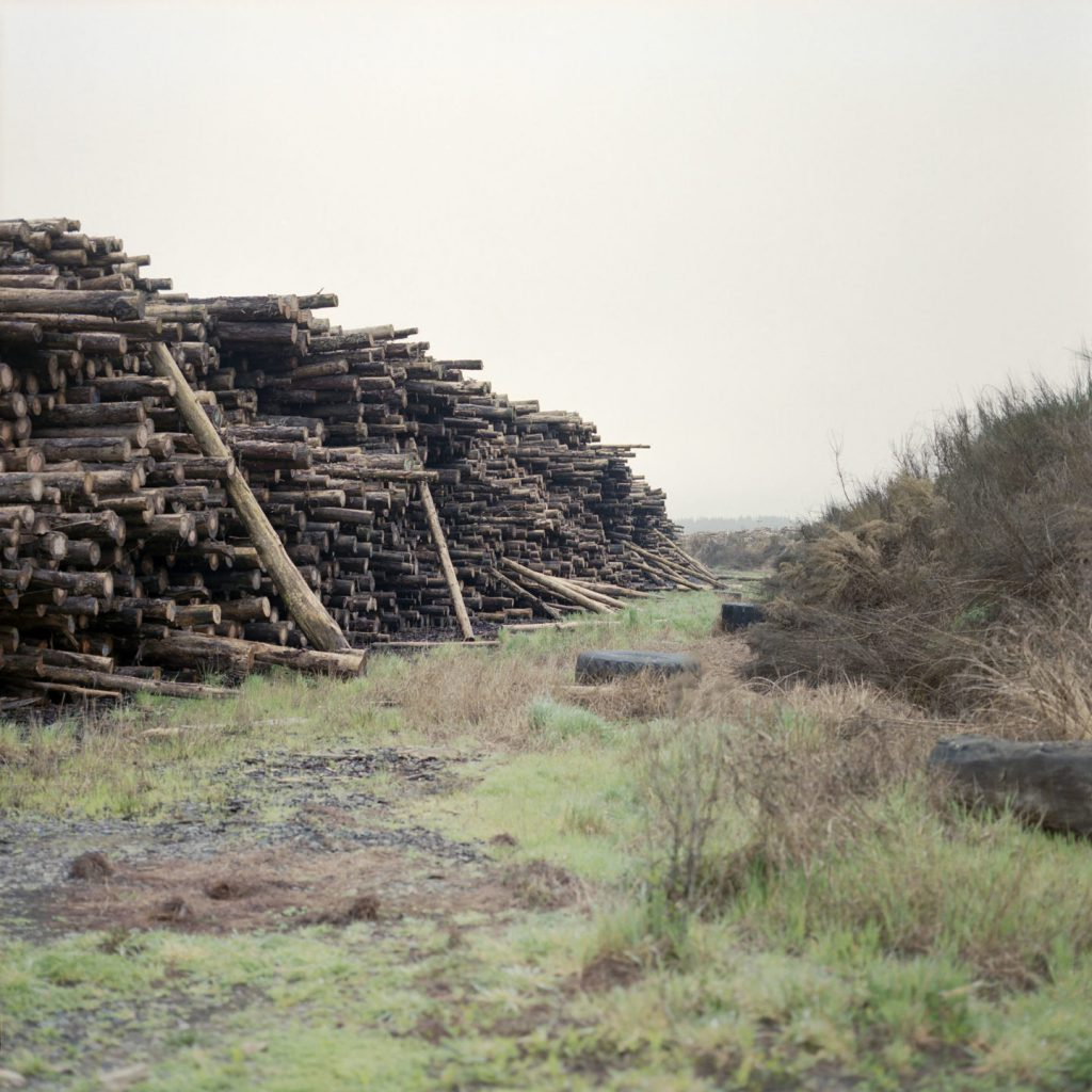 Kinleith Forest, 2017. Shot on Kodak Portra 400 with a Bronica SQ-A.
